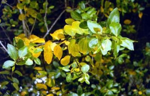 ecology of plant invasion pdf