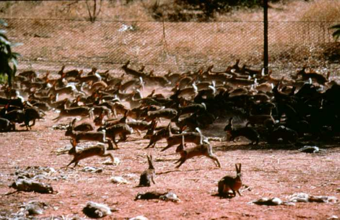 New South Wales-South Australian border in the early 1990s (Photo: Peter Bird, South Australian Animal and Plant Control Commission)