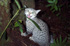 Felis catus on Chatham Island, New Zealand (Photo: Rex Williams, Chatham Island Taiko Trust)