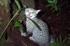 Felis catus on Chatham Island, New Zealand (Photo: Rex Williams, Chatham Island Taiko Trust)